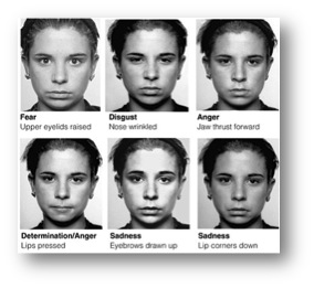 Paul Ekman group facial expression pictures